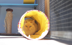 cat in colourful toy tunnel - small image